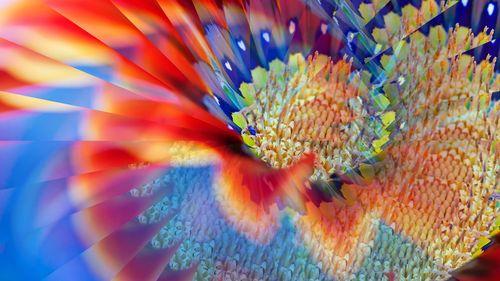 Fiore_coloratissimo2