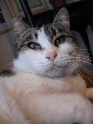 Miao1